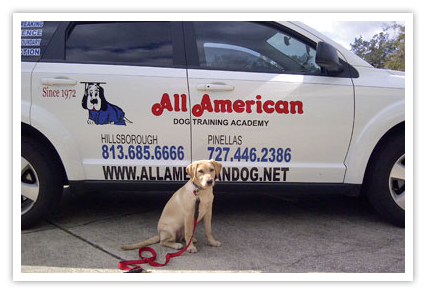 dog training car tampa