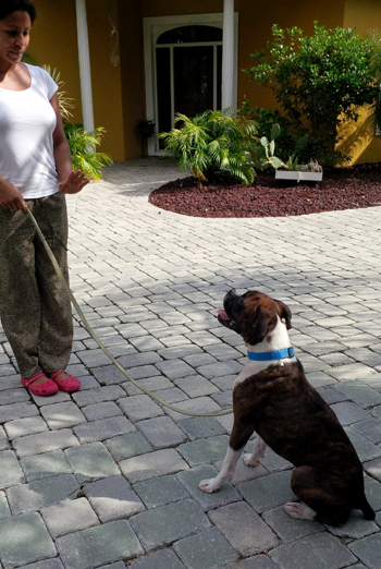 cheval dog training florida