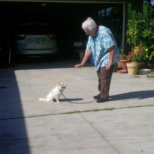 Palm Harbor Dog Training Center