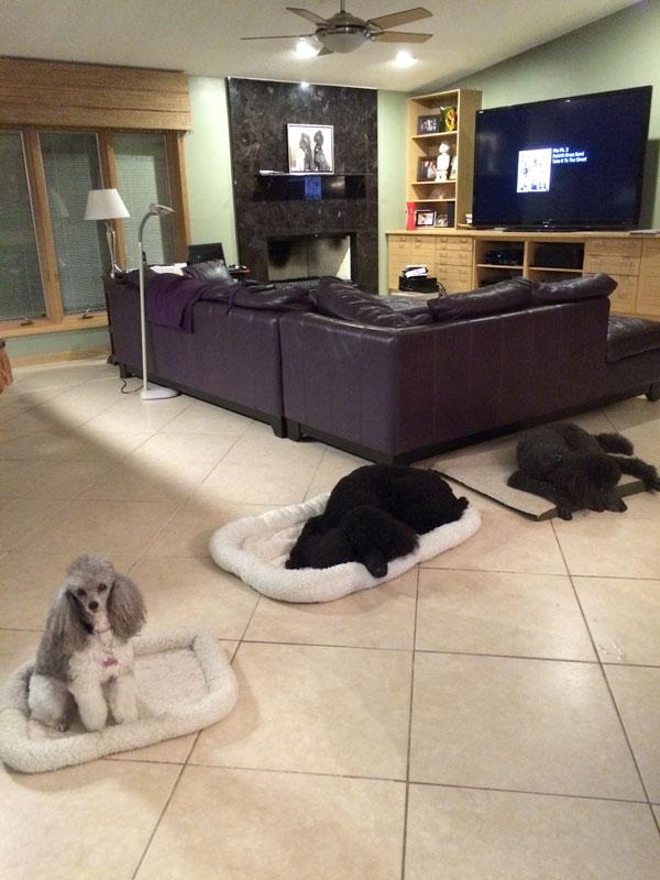 westshore dog trainer