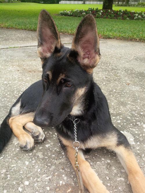 lakeland dog training