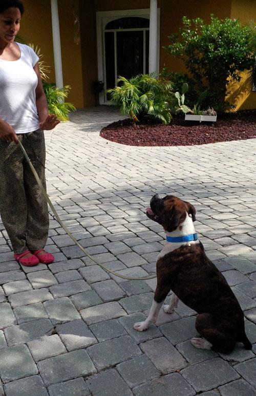 new port richey dog trainer