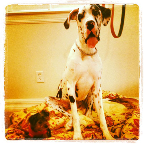 oldsmar dog trainer