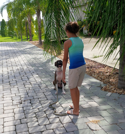 palm harbor dog trainer