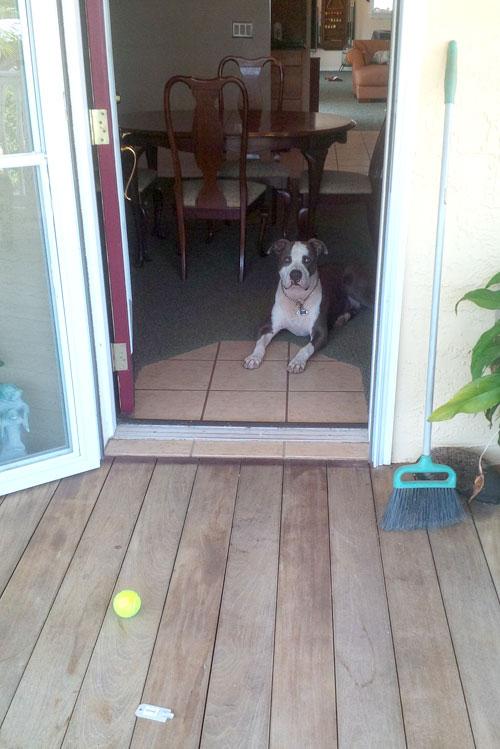 valrico dog training