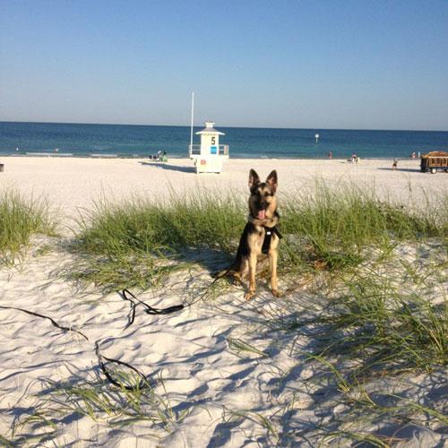treasure island dog trainer