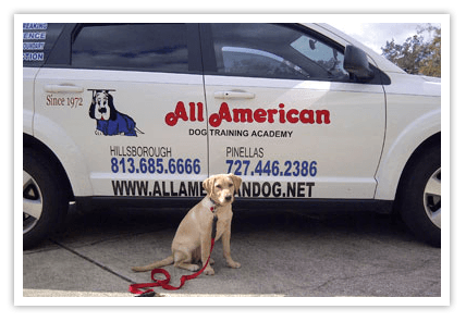 all-american-dog-training-car