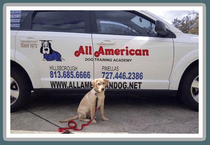 all-american-dog-training-car