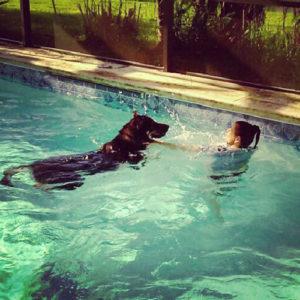 apollo beach dog training