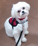 cgc-dog-training-tampa-canine-good-citizen