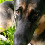 dog training in westchase