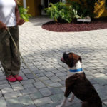 dog training in new port richey