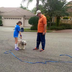 plant city dog training