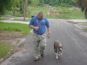 dog training pitbull2
