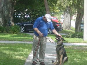 dog training gsd