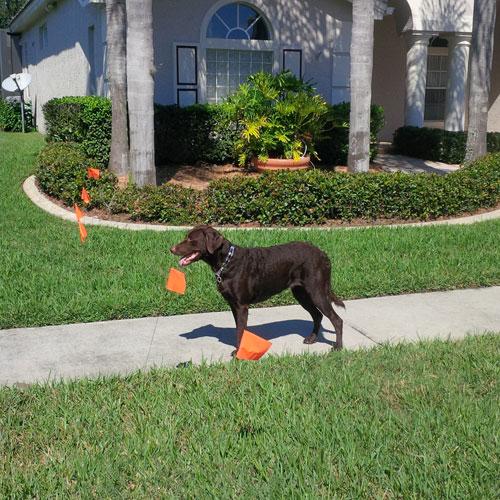 dog training boundary 2