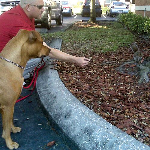 tampa dog training