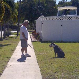 basic-dog-trainer-bradenton