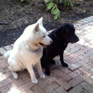 basic-dog-training-obedience-tampa