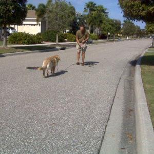 basic-dog-training-tampa