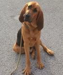 basic-obediance-dog-training-tampa