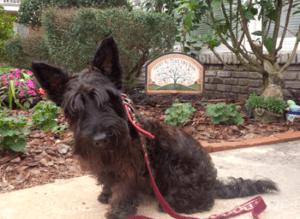 brandon-fl-dog-training