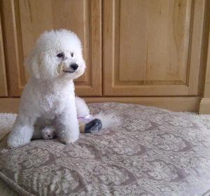 housebreaking-dog-training-top