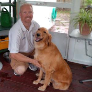 dog training golden retriever