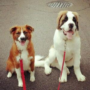 dog training basic