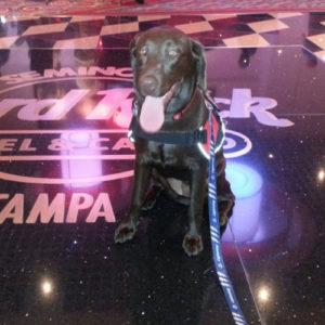 service-dog-training-tampa-bay