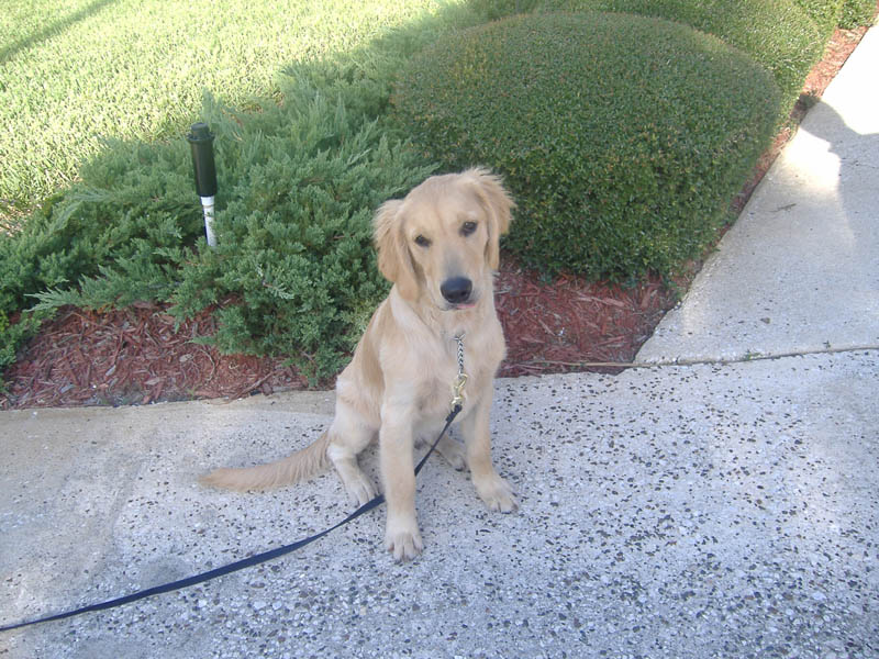 dog training housebreaking