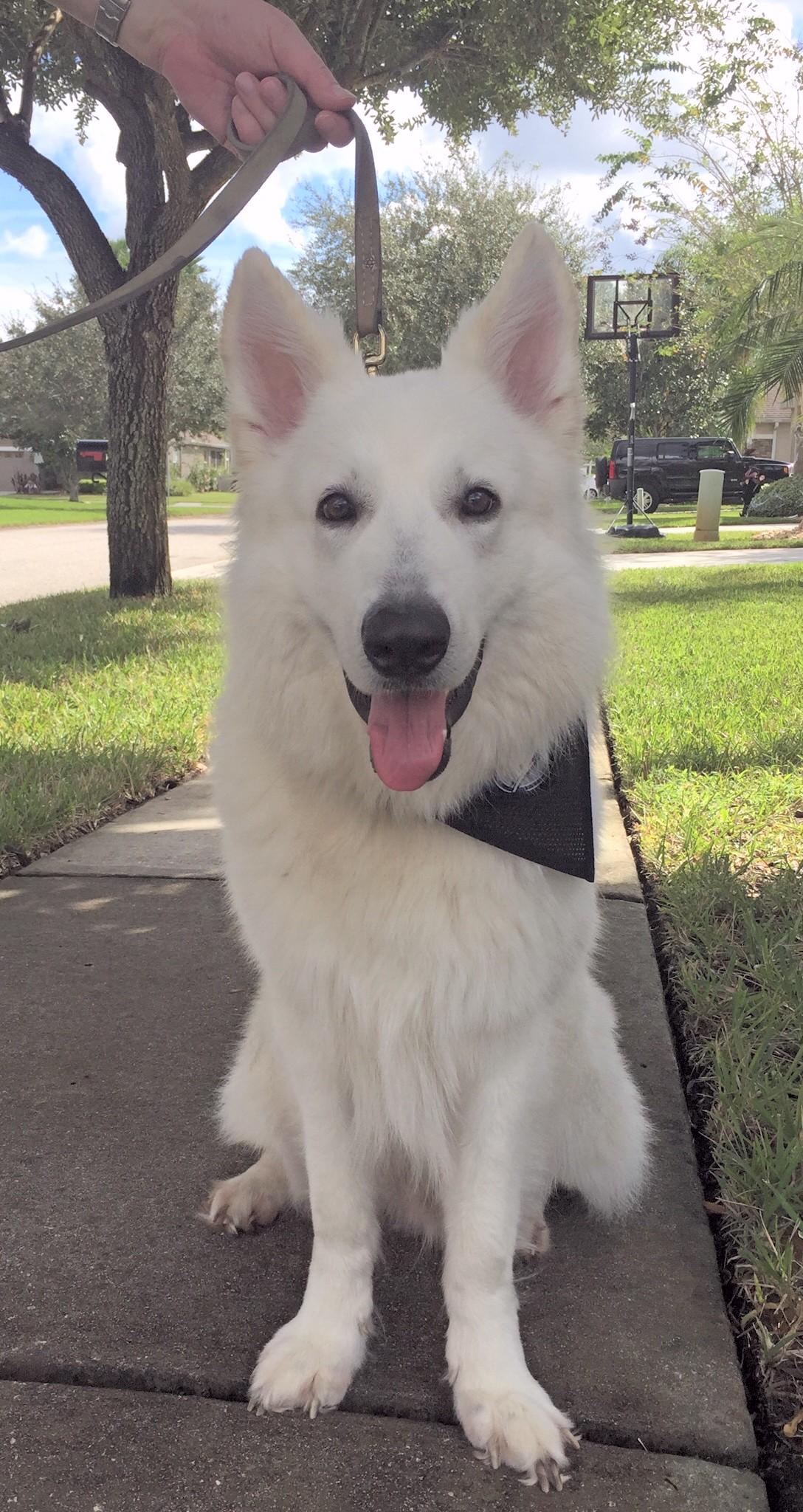 dog training lutz