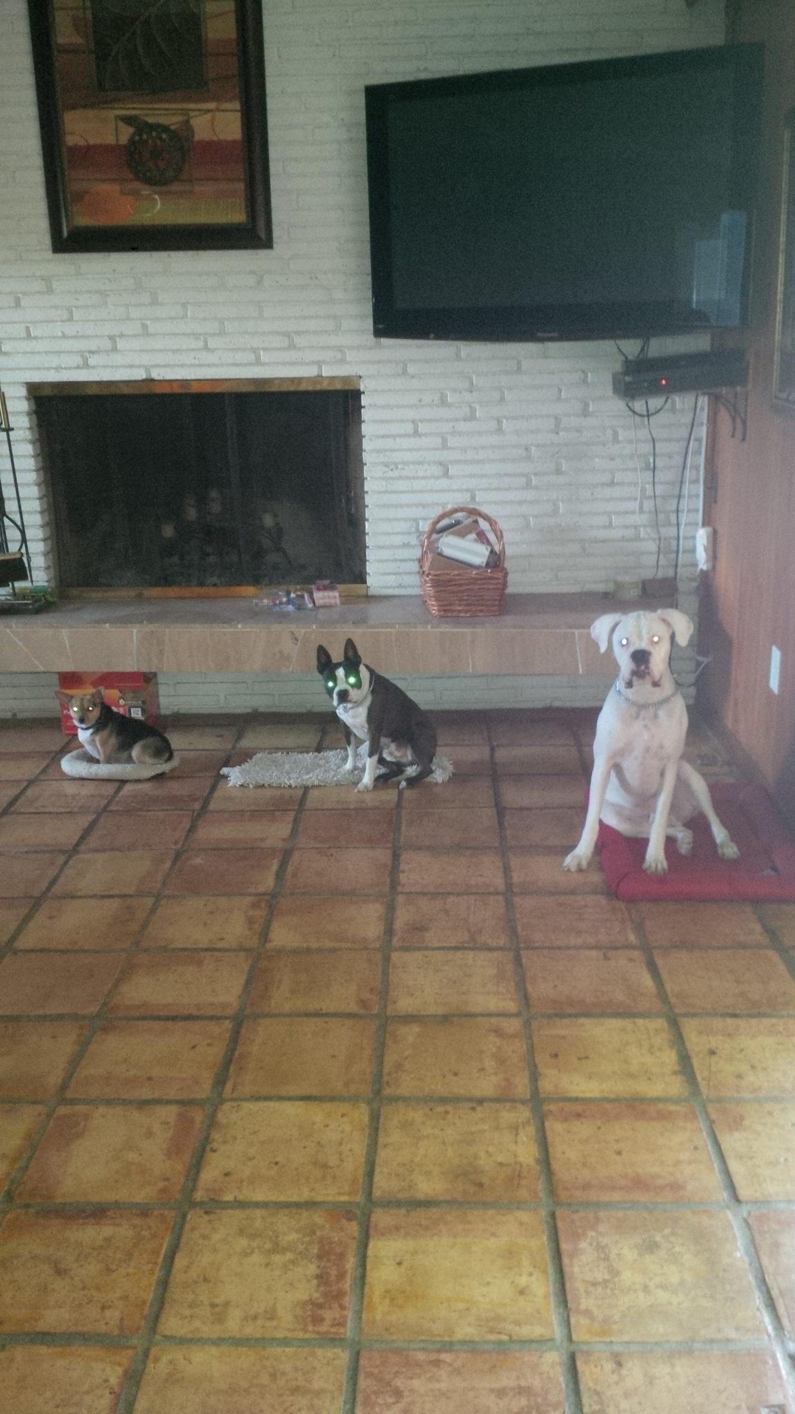 dog training place