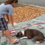 dog training down