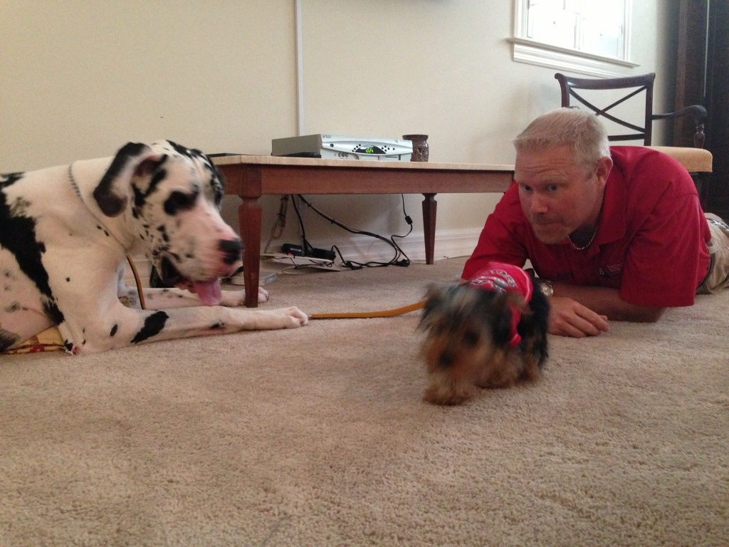 dog training intro