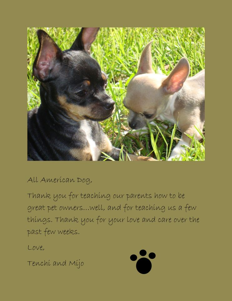 Thank you for teaching our parents to be great pet owners Tenchi and Mijo