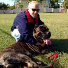 dog training cane corso